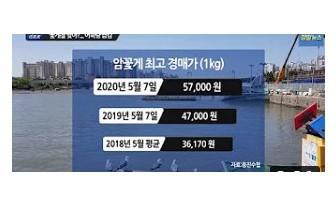 '코로나19'로 꽃게 어획량.소비 '뚝'...소비價 마리당 2만원대 '金게'