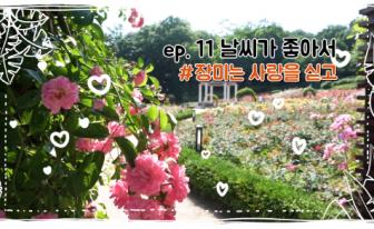 인천 장미 핫 플레이스 '연수구 장미근린공원'